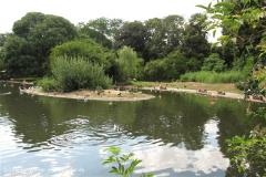 Zoo Krefeld 240710- IMG_9300_1525