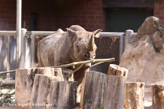 Zoo Krefeld 240710- IMG_9342
