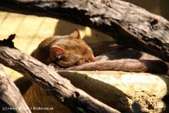 Zoo Krefeld 240710- IMG_9354