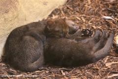 Zoo Krefeld 240710- IMG_9369