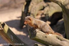 Zoo-Magdeburg-070410-IMG_9654