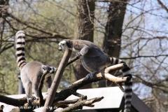 Zoo-Magdeburg-070410-IMG_9734