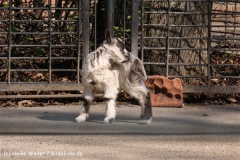 Zoo-Magdeburg-070410-IMG_9743