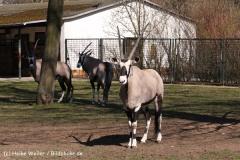 Zoo-Magdeburg-070410-IMG_9758