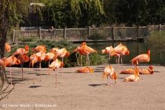 Zoo-Magdeburg-070410-IMG_9813