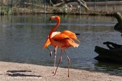 Zoo-Magdeburg-070410-IMG_9819