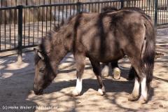 Zoo-Magdeburg-070410-IMG_9848