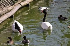 Zoo-Magdeburg-070410-IMG_9861