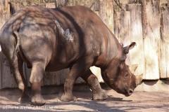Zoo-Magdeburg-070410-IMG_9864