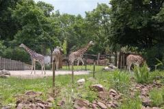 Zoo-Magdeburg-200610-IMG_4227
