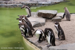 Zoo-Magdeburg-200610-IMG_4291