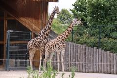 Zoo-Magdeburg-200610-IMG_4308