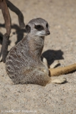 Zoo_Magdeburg_260915_IMG_9242