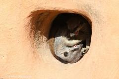 Zoo_Magdeburg_260915_IMG_9250