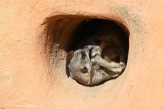 Zoo_Magdeburg_260915_IMG_9253