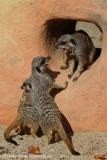 Zoo_Magdeburg_260915_IMG_9268