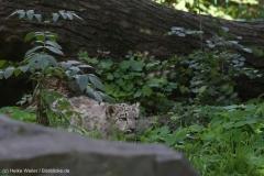 Zoo_Magdeburg_260915_IMG_9311