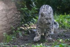 Zoo_Magdeburg_260915_IMG_9312
