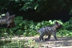 Zoo_Magdeburg_260915_IMG_9333