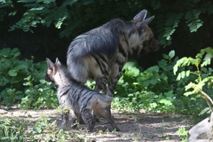 Zoo_Magdeburg_260915_IMG_9335