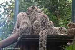 Zoo_Magdeburg_260915_IMG_9343