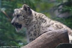 Zoo_Magdeburg_260915_IMG_9351