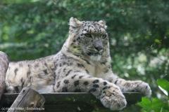 Zoo_Magdeburg_260915_IMG_9368