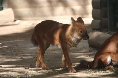 Zoo_Magdeburg_260915_IMG_9380