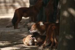 Zoo_Magdeburg_260915_IMG_9381