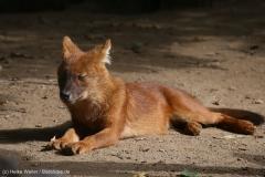 Zoo_Magdeburg_260915_IMG_9393