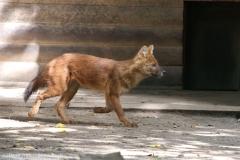 Zoo_Magdeburg_260915_IMG_9402