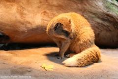Zoo_Magdeburg_260915_IMG_9429