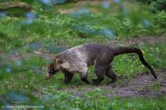 Zoo_Magdeburg_260915_IMG_9440