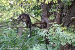 Zoo_Magdeburg_260915_IMG_9441