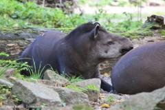 Zoo_Magdeburg_260915_IMG_9452