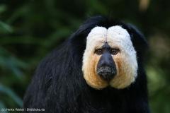 Zoo_Magdeburg_260915_IMG_9453