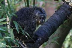 Zoo_Magdeburg_260915_IMG_9458