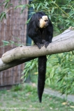 Zoo_Magdeburg_260915_IMG_9459