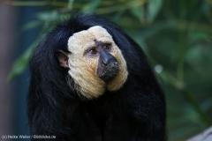 Zoo_Magdeburg_260915_IMG_9465
