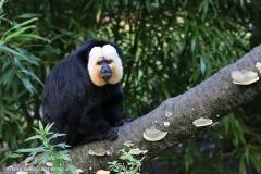 Zoo_Magdeburg_260915_IMG_9468