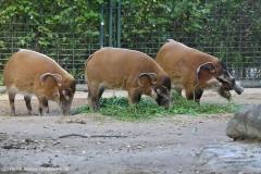 Zoo_Magdeburg_260915_IMG_9473