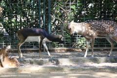 Zoo_Magdeburg_260915_IMG_9476