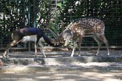 Zoo_Magdeburg_260915_IMG_9480