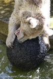 Zoo_Muenster_010813_IMG_3309