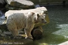 Zoo_Muenster_010813_IMG_3320