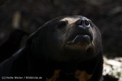 Zoo_Muenster_010813_IMG_3333