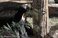 Zoo_Muenster_010813_IMG_3349