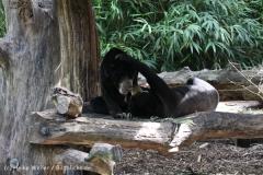 Zoo_Muenster_010813_IMG_3391