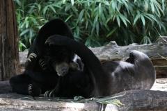 Zoo_Muenster_010813_IMG_3397