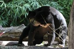 Zoo_Muenster_010813_IMG_3403